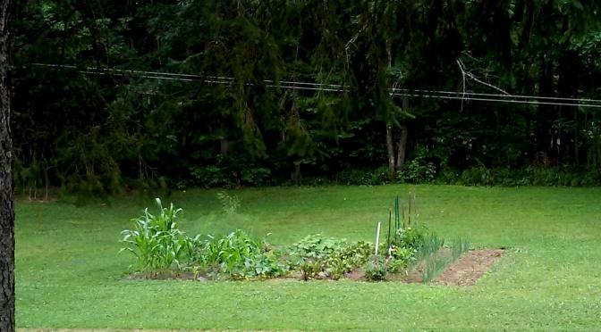 LOVE My Garden!